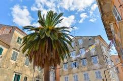 Palme auf einem kleinen Quadrat in Korfu stockfotos