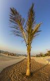 Palme auf einem leeren Strand Stockfotografie
