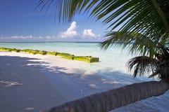 Palme auf einem Sandstrand Stockfotos