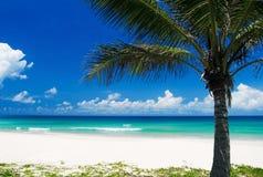 Palme auf einem tropischen Strand stockbilder