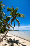 Palme auf einem tropischen Strand stockfotos