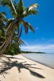 Palme auf einem tropischen Strand lizenzfreies stockfoto