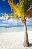 Palme auf einem verlassenen tropischen Strand Stockbild