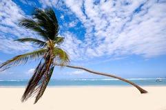 Palme auf exotischem Strand Stockbild