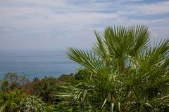 Palme auf Hintergrund des Meeres Stockfotografie