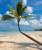 Palme auf karibischem Strand mit weißem Sand Lizenzfreie Stockfotos