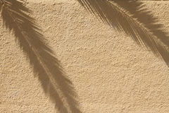 Palme auf Schatten auf Wand Stockfotos