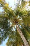 Palme auf Sonnenschein lizenzfreie stockfotos