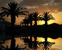 Palme auf Sonnenuntergang stockfotografie