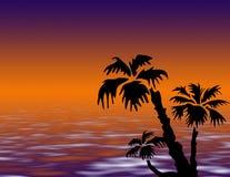 Palme auf Sonnenuntergang Lizenzfreies Stockfoto