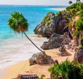 Palme auf Strand Lizenzfreie Stockfotografie