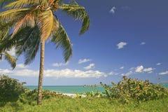 Palme auf Strand, Cabatete, Dominikanische Republik stockfoto