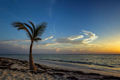 Palme auf Strand am Sonnenaufgang Lizenzfreie Stockfotos