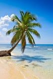 Palme auf weißem Sandstrand nahe cyan-blauem Ozean Stockbilder