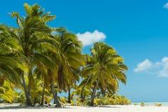 Palme-Bäume auf tropischem Strand Lizenzfreies Stockfoto