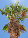 Palme-Baum lizenzfreies stockbild