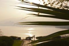 Palme-Baum nah oben bei einem Sonnenuntergang stockfotografie