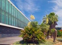Palme blüht Stockbilder