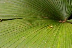 Palme-Blatt lizenzfreie stockfotografie