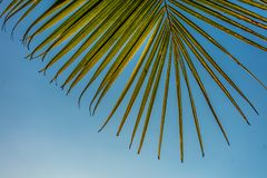 PALME-BLATT VON TAHITI lizenzfreies stockfoto