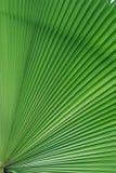 Palme-Blattdetails Stockbild