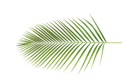 Palme, Blattform und Beschaffenheit Stockbild