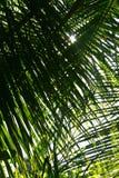 Palme-Blattnahaufnahme Stockfotos