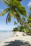 Palme brasiliane tropicali a distanza della spiaggia Fotografia Stock Libera da Diritti