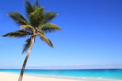 Palme caraibiche della noce di cocco nel mare del tuquoise Fotografia Stock Libera da Diritti