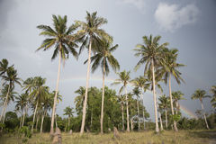 Palme, cespugli e spiaggia sabbiosa con il cielo nuvoloso Fotografia Stock Libera da Diritti