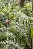 Palme che crescono nella foresta pluviale tropicale Fotografie Stock