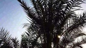 Palme che passano da un cielo blu Guidando attraverso Beverly Hills soleggiata Los Angeles, California Verde stock footage