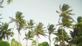 Palme che si muovono nel vento contro il cielo luminoso stock footage