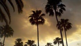 Palme con il cielo nuvoloso Fotografia Stock Libera da Diritti