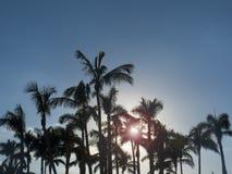 Palme con il sole nei precedenti Fotografie Stock