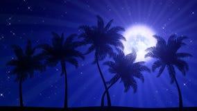 Palme con la luna (fondo animato di HD) illustrazione di stock