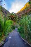 Palme con una strada vicino al villaggio con le montagne, Tenerife, C di Masca fotografia stock libera da diritti
