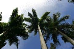 Palme contro il cielo Fotografie Stock Libere da Diritti
