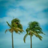 Palme contro il cielo tropicale con l'aereo dell'aeroplano in Backgroun Fotografie Stock Libere da Diritti