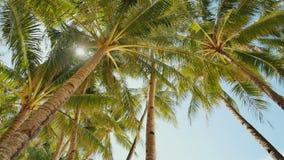 Palme contro lo sfondo di un cielo blu-chiaro in bel tempo filippine stock footage