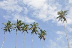 Palme contro un bello cielo libero fotografie stock libere da diritti