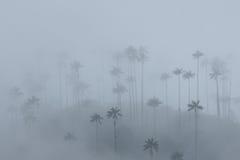 Palme da cera nella foschia, valle di Cocora, Colombia immagine stock libera da diritti