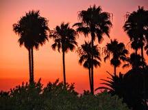 Palme del Laguna Beach Fotografia Stock