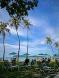 Palme del witn della spiaggia di Langkawi immagine stock
