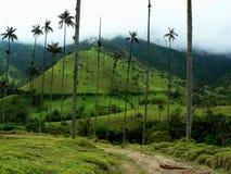 Palme della cera, salento, Colombia Fotografia Stock
