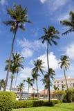 Palme della città di Nassau immagini stock libere da diritti