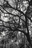 Palme della noce di cocco. fotografie stock
