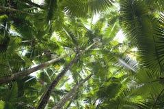 Palme della noce di cocco Immagini Stock Libere da Diritti
