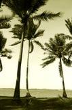 Palme della noce di cocco in vento del mare Immagine Stock