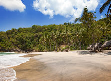 Palme della spiaggia e di Sandy contro il cielo blu Fotografia Stock